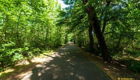 Droga Leśna